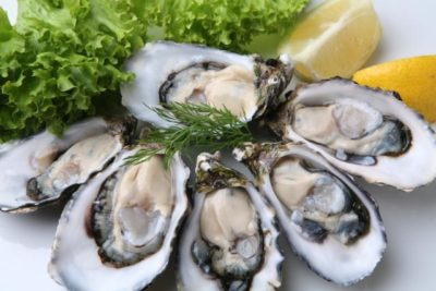 preview-full-iStock_000003647440 Oyster-2
