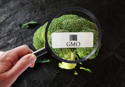 broccoli GMO under magnifying glass