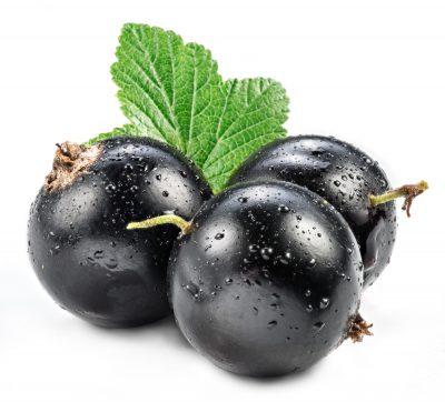 fresh black currant berry